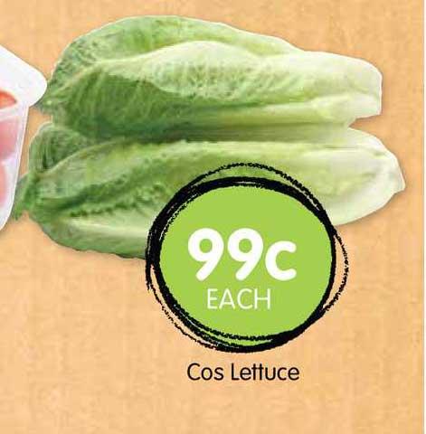Spudshed Cos Lettuce
