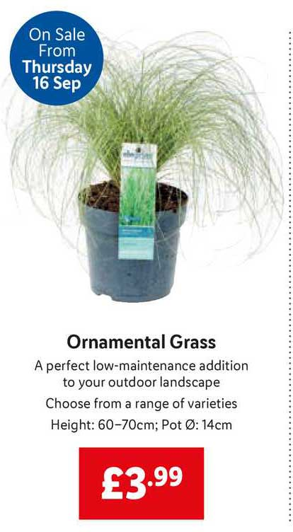 Lidl Ornamental Grass