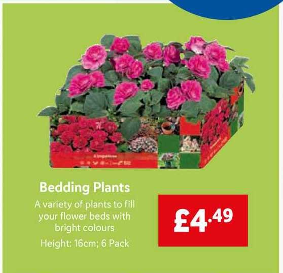 Lidl Bedding Plants
