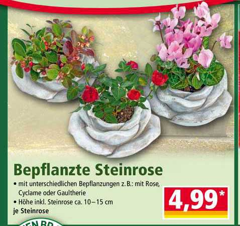 NORMA Bepflanzte Steinrose