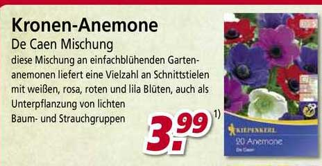 BauSpezi Kronen-anemone