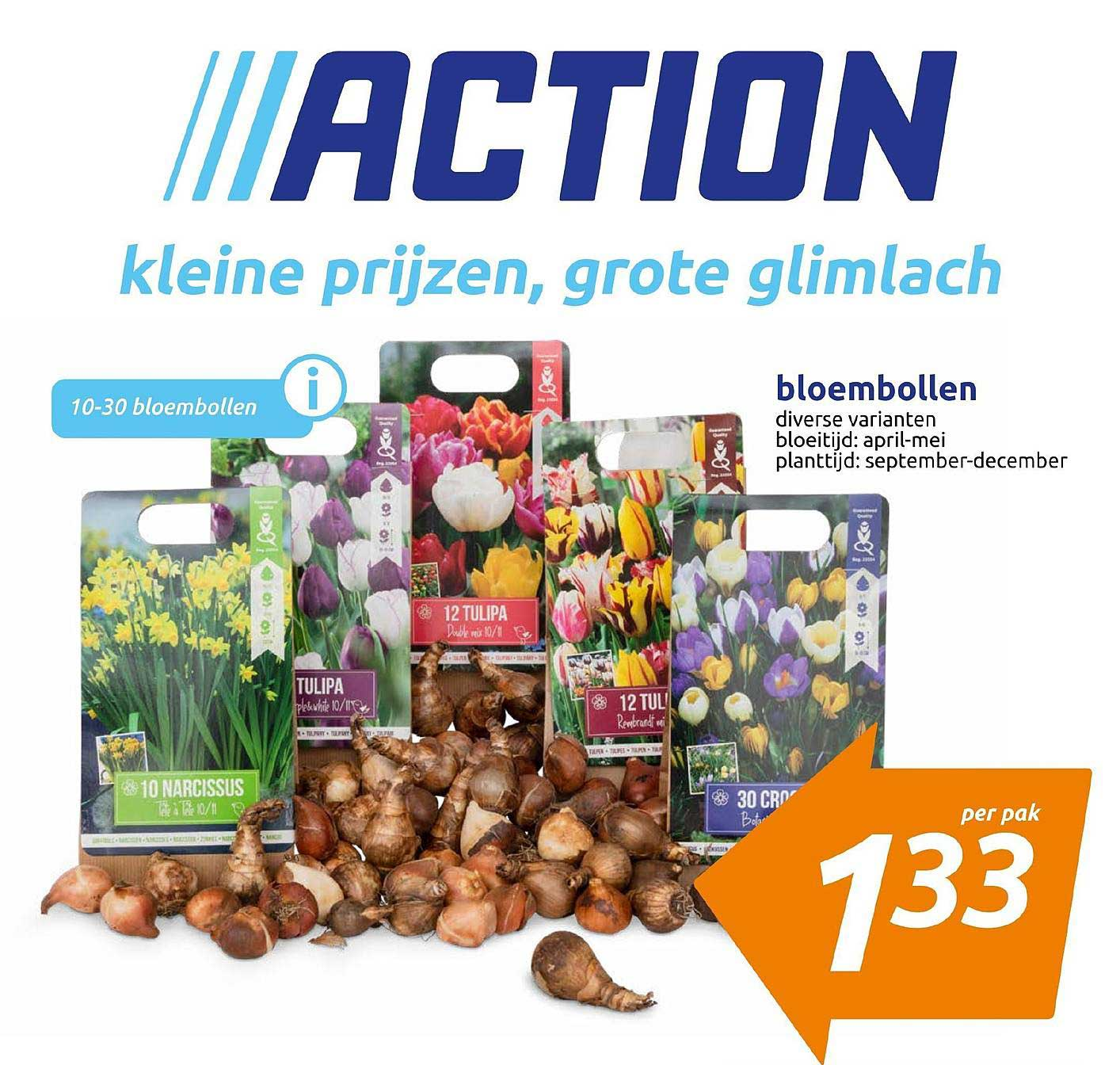 Action Bloembollen