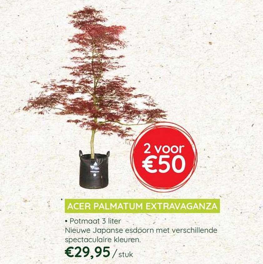 Eurotuin Acer Palmatum Extravaganza