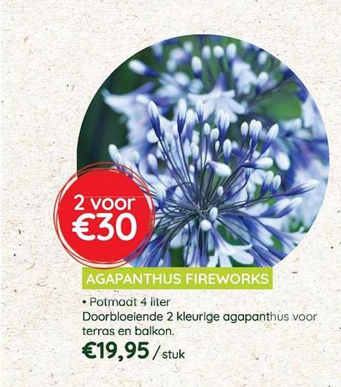 Eurotuin Agapanthus Fireworks