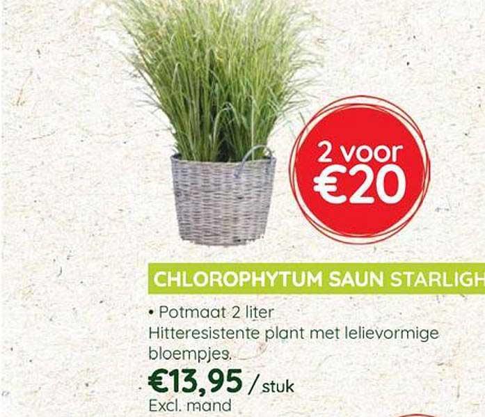 Eurotuin Chlorophytum Saun Starlight