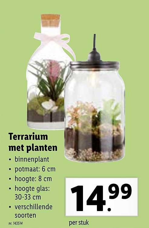 Lidl Terrarium Met Planten