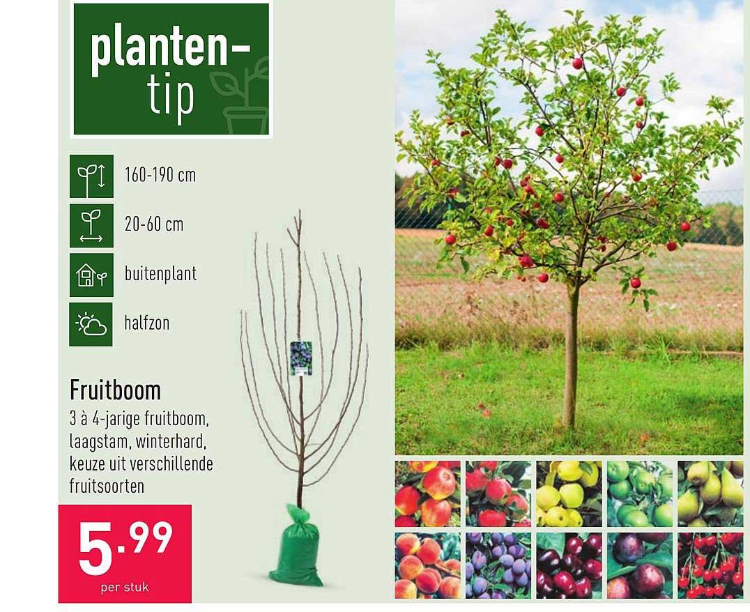 ALDI Fruitboom