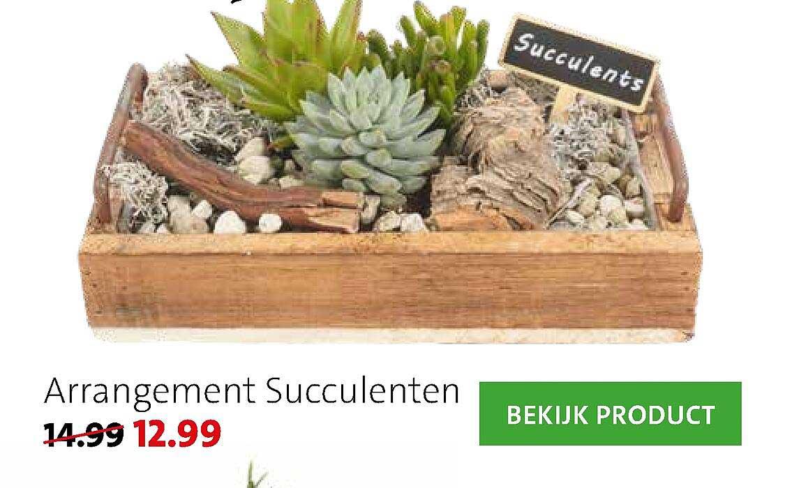 Intratuin Arrangement Succulenten