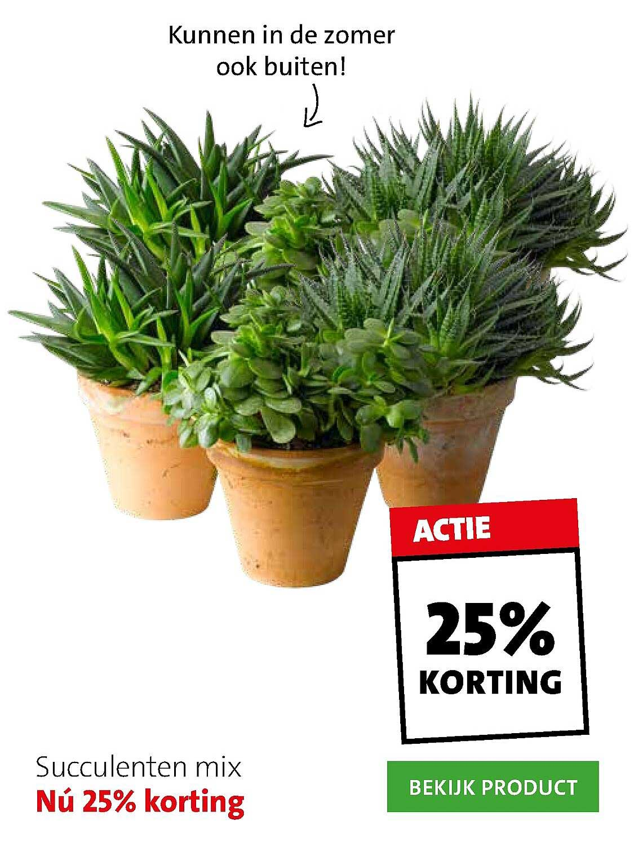 Intratuin Succulenten Mix 25% Korting