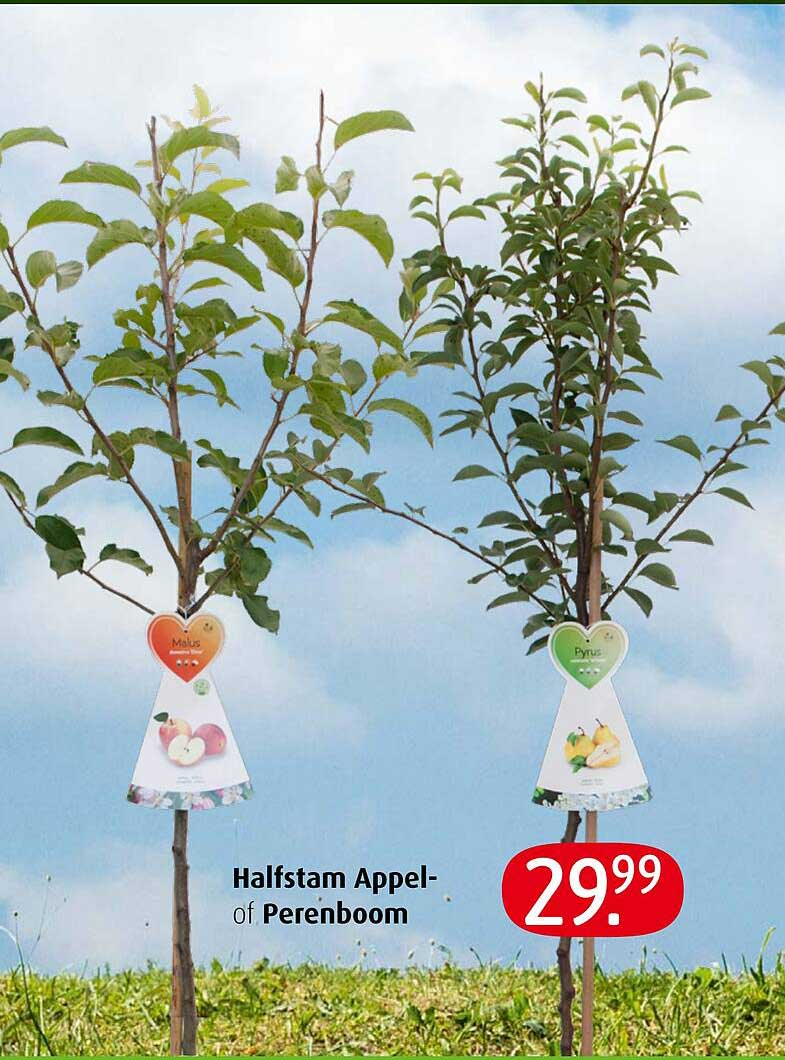 Tuincentrum Overvecht Halfstam Appel- Of Perenboom