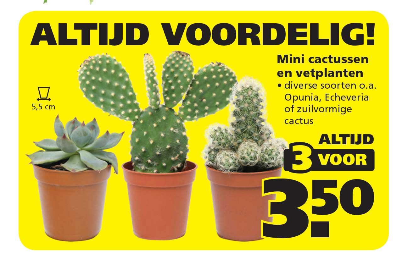 Ranzijn Tuin & Dier Mini Cactussen En Vetplanten