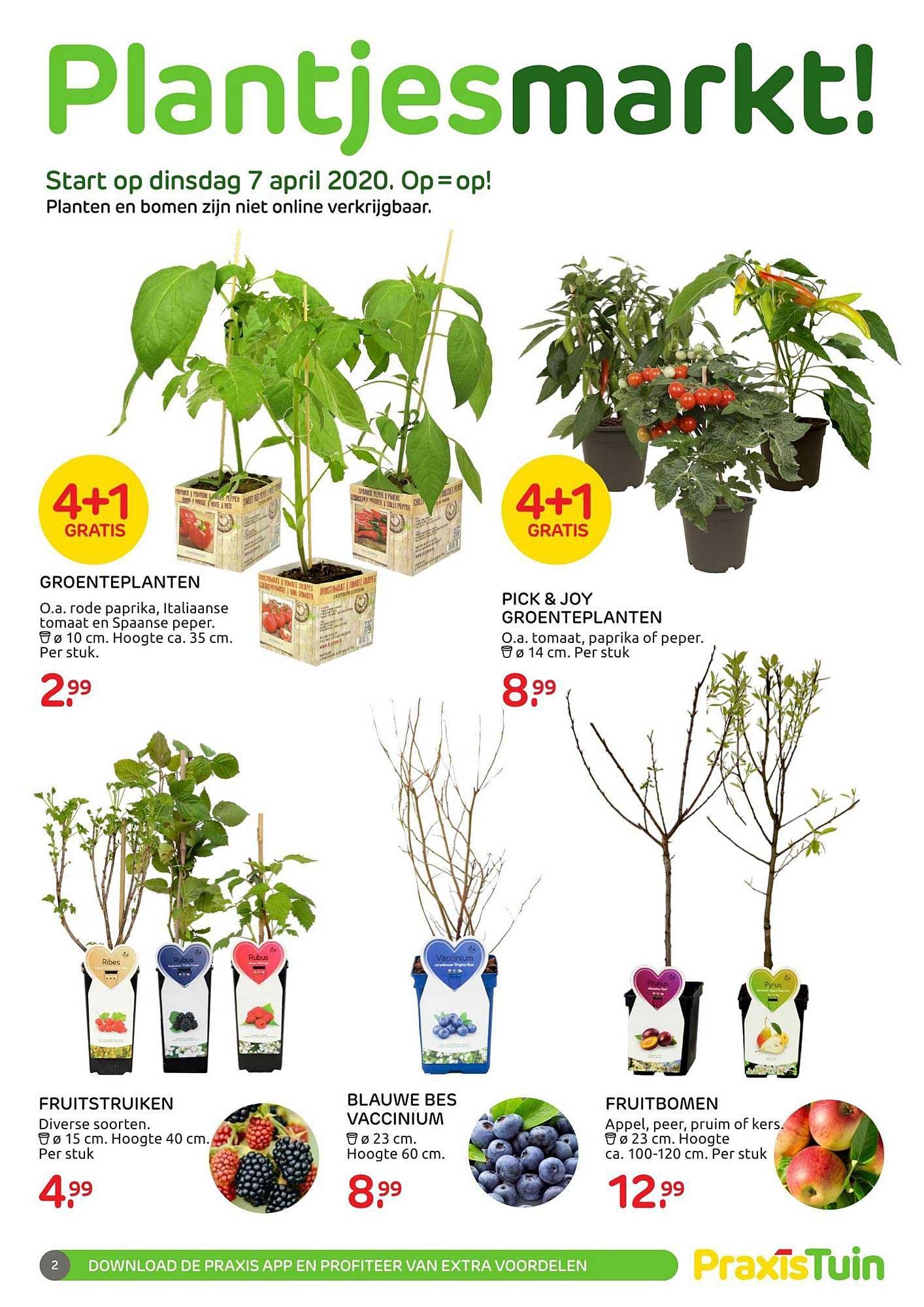 Praxis Plantjesmarkt