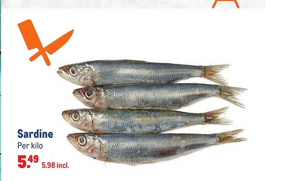 Makro Sardine