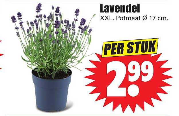 Dirk Lavendel