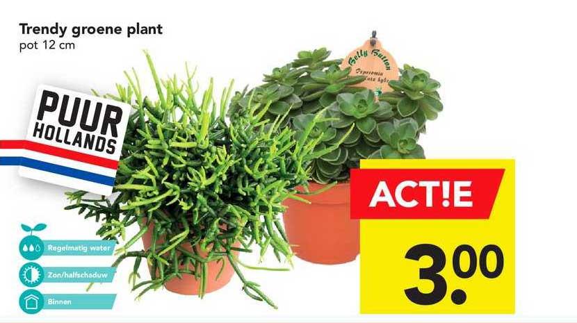 DEEN Trendy Groene Plant