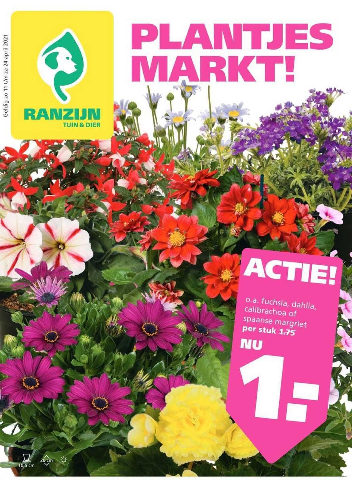 Ranzijn Tuin & Dier Fuchsia, Dahlia, Calibrachoa OfSpaanse Margriet