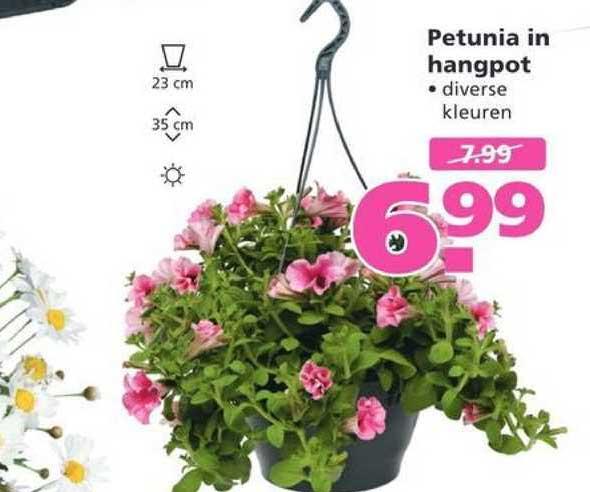 Ranzijn Tuin & Dier Petunia In Hangpot