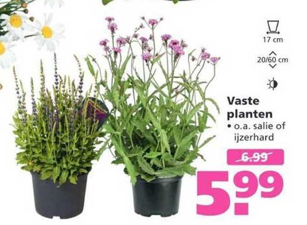 Ranzijn Tuin & Dier Vaste Planten