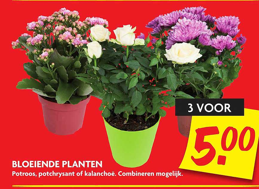 DekaMarkt Bloeiende Planten