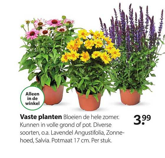 Boerenbond Vaste Planten