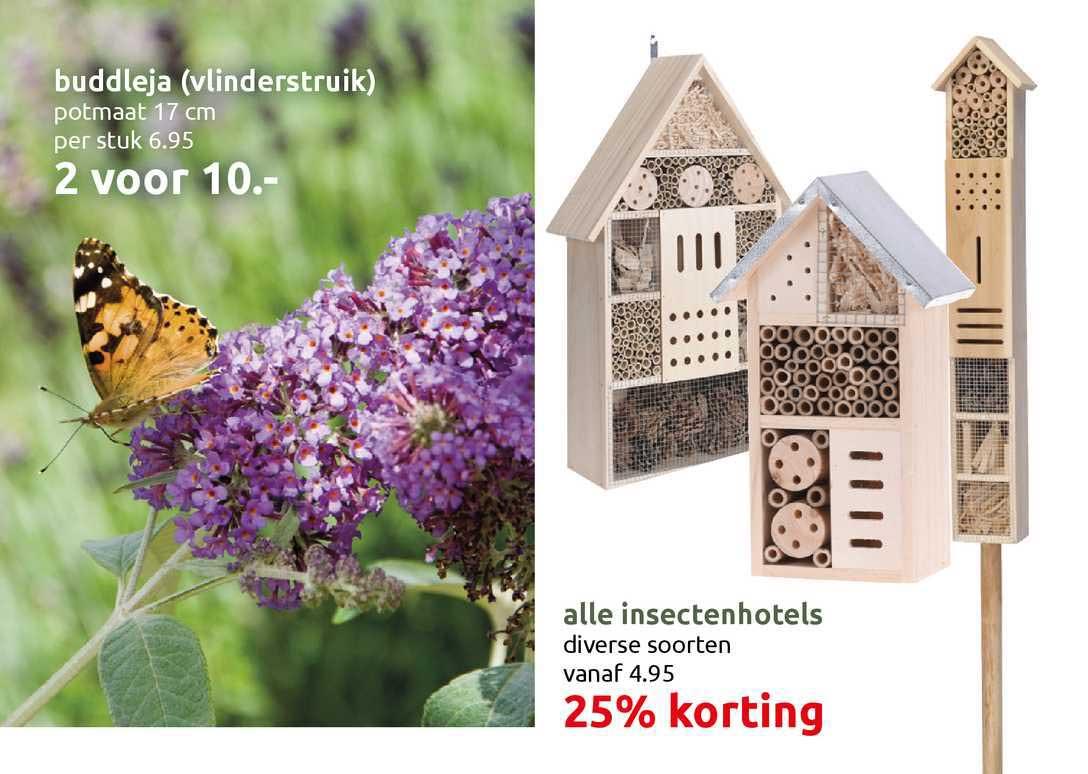 DekaTuin Buddleja (Vlinderstruik) Of Alle Insectenhotels 25% Korting