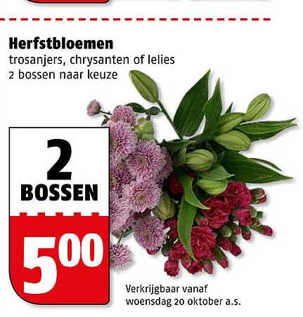 Poiesz Herfstbloemen Trosanjers, Chrysanten Of Lelies