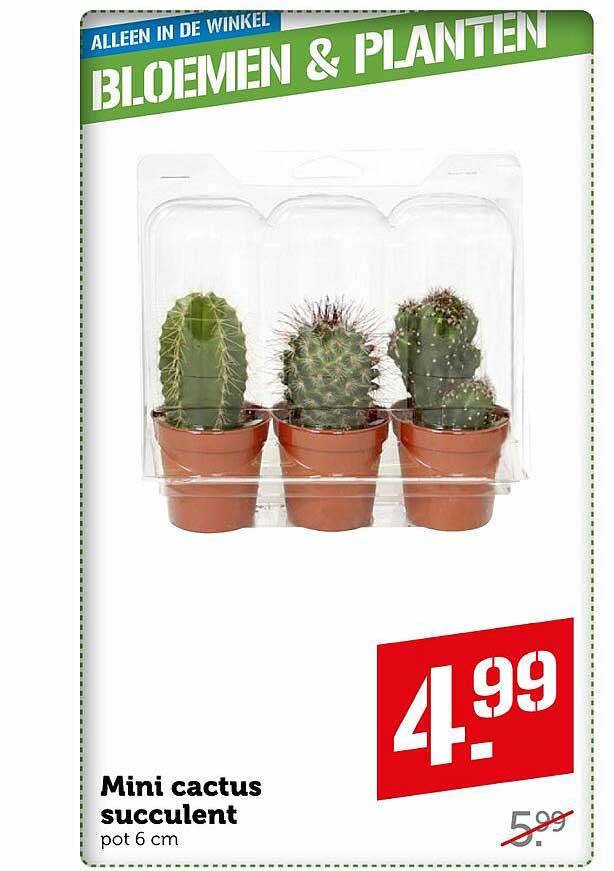 Coop Mini Cactus Succulent