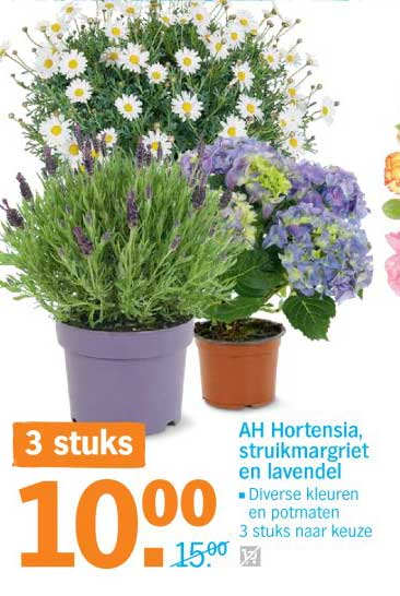 Albert Heijn AH Hortensia, Struikmargriet En Lavendel