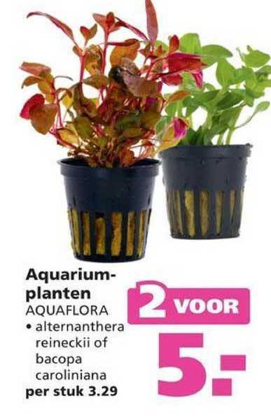 Ranzijn Tuin & Dier Aquariumplanten Aquaflora