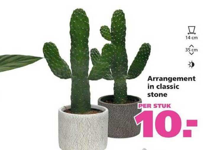 Ranzijn Tuin & Dier Arrangement In Classic Stone