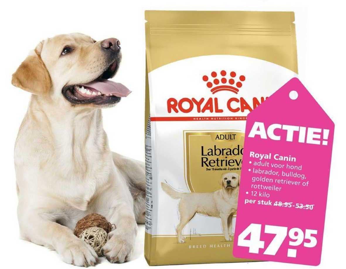 Ranzijn Tuin & Dier Royal Canin Adult Labrador Retriever