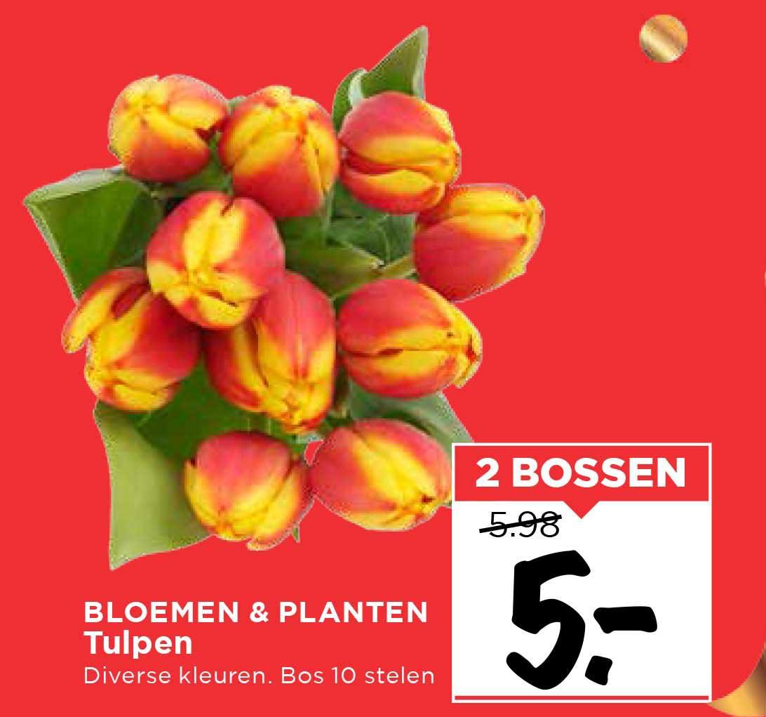 Vomar Bloemen & Planten Tulpen