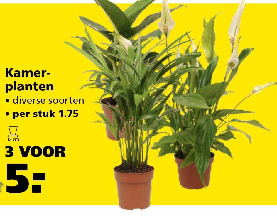 Ranzijn Tuin & Dier Kamerplanten