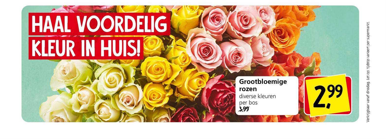 Jan Linders Grootbloemige Rozen