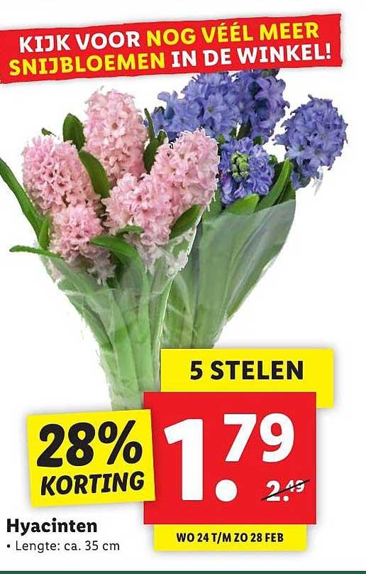 Lidl Hyacinten 28% Korting