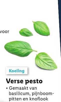 Lidl Verse Pesto