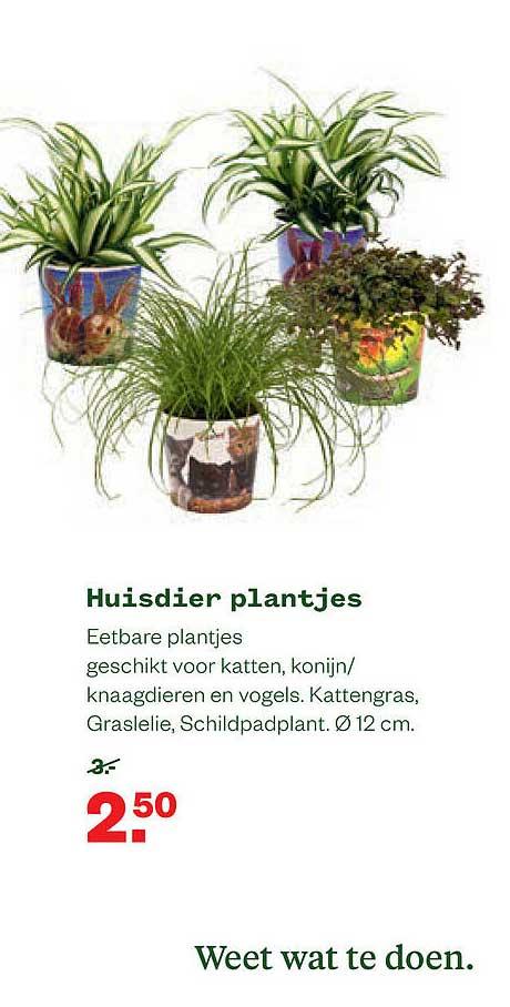 Welkoop Huisdier Plantjes