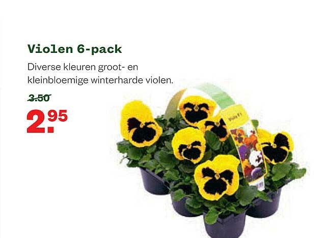 Welkoop Violen 6-Pack