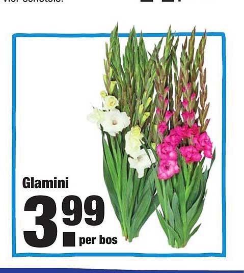 ALDI Glamini