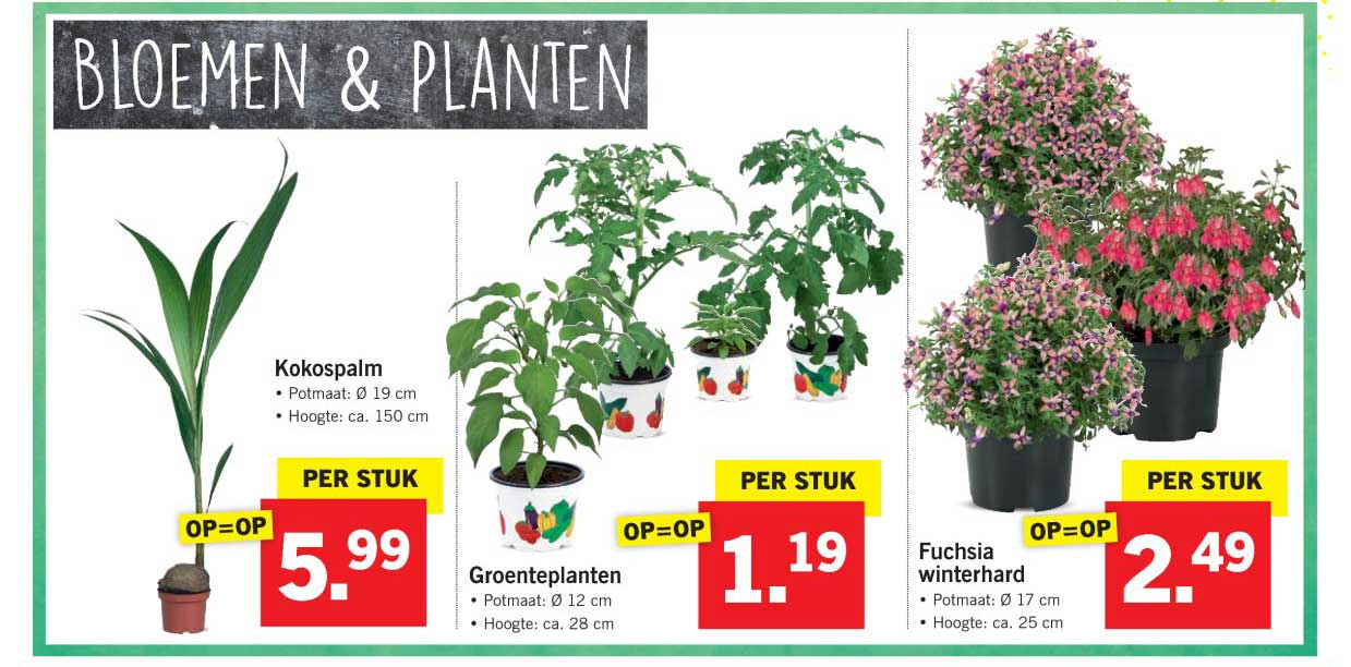Lidl Bloemen & Planten
