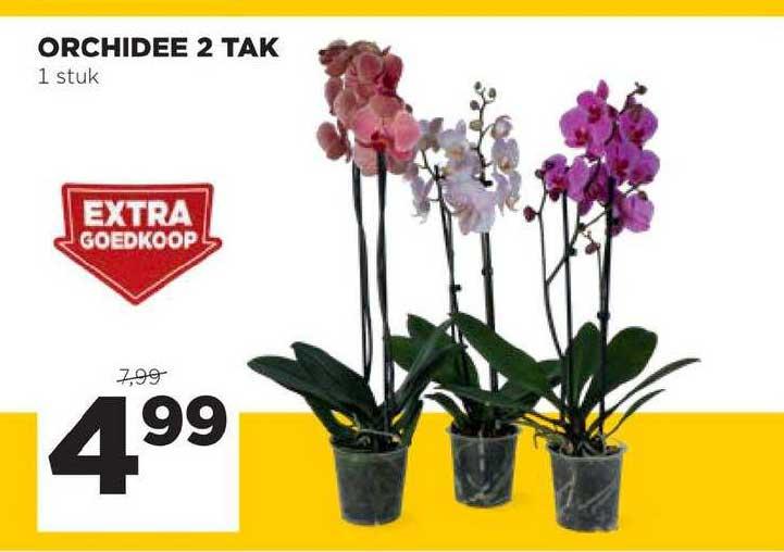Jumbo Orchidee 2 Tak