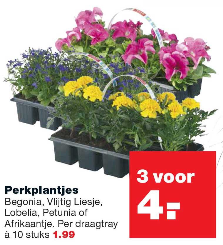 Praxis Perkplantjes