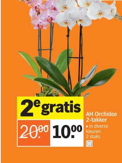 Albert Heijn AH Orchidee 2 Takker: 2e Gratis