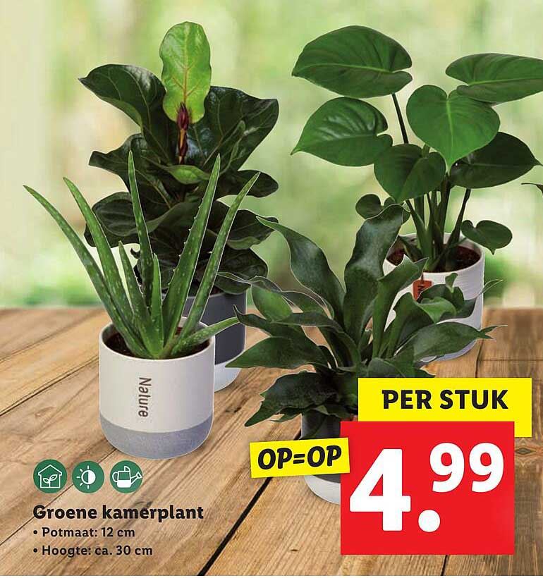 Lidl Groene Kamerplant