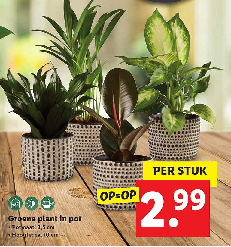 Lidl Groene Plant In Pot