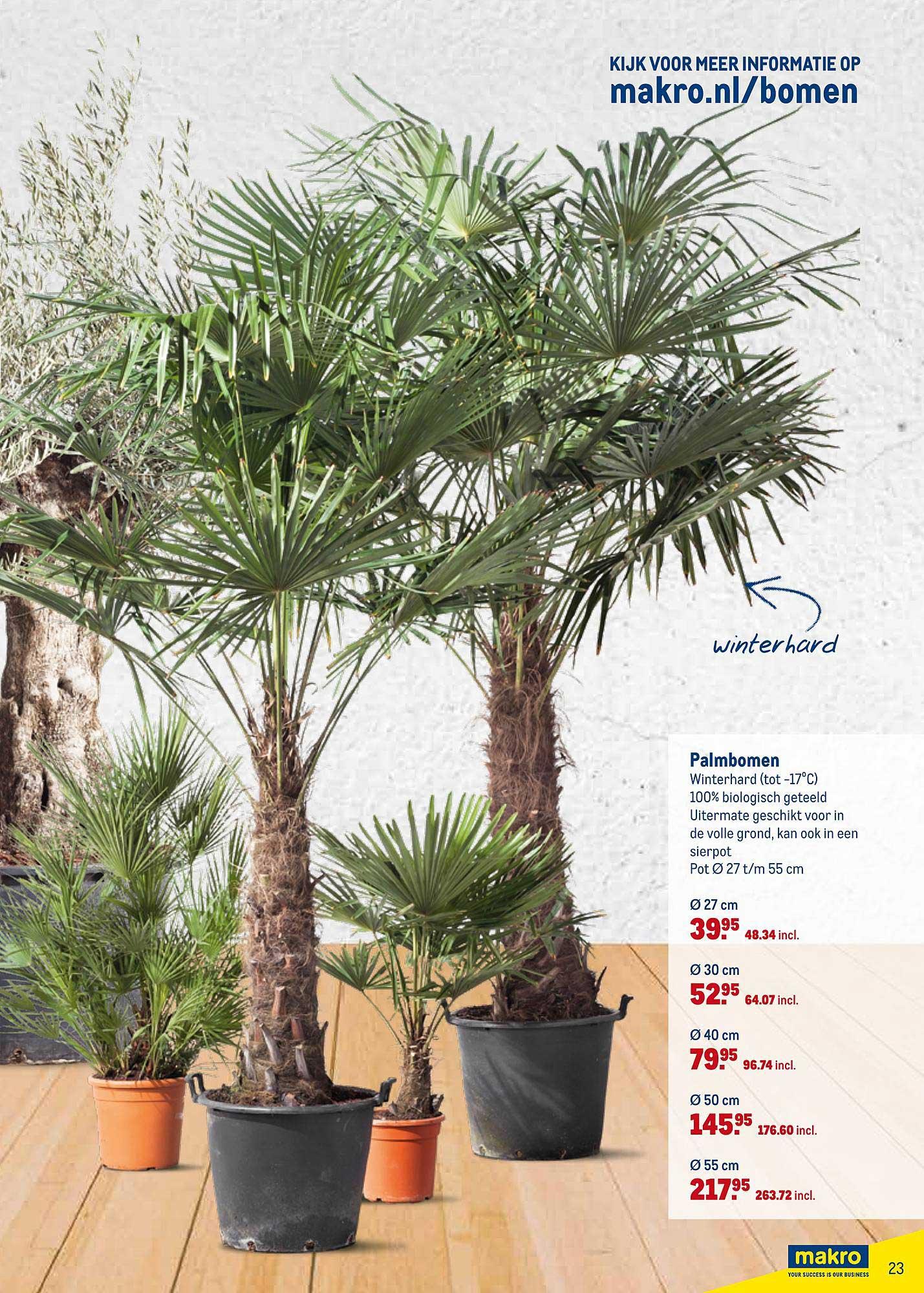 Makro Palmbomen