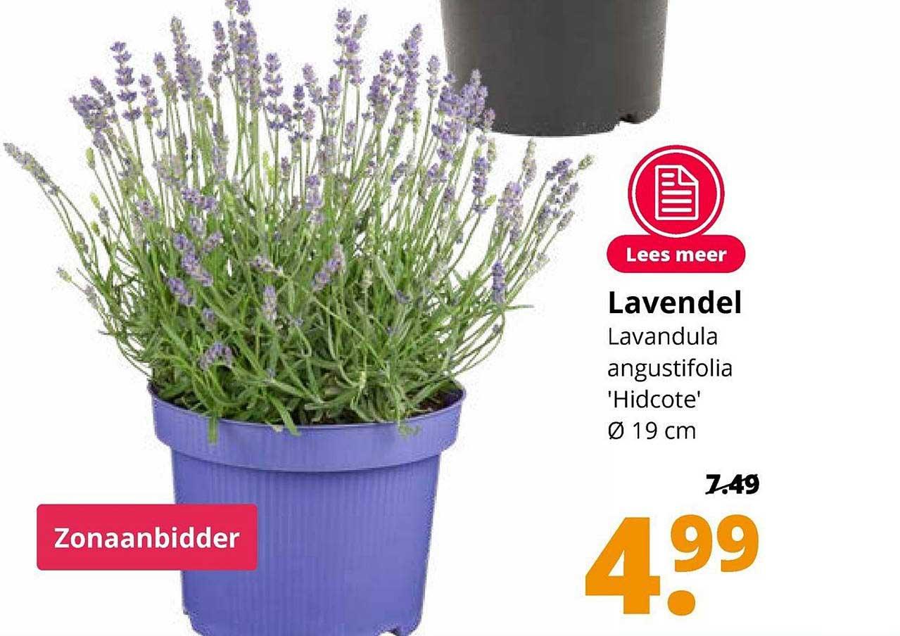 GroenRijk Lavendel