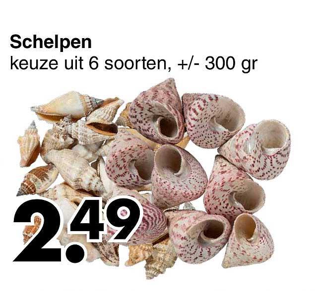 Wibra Schelpen