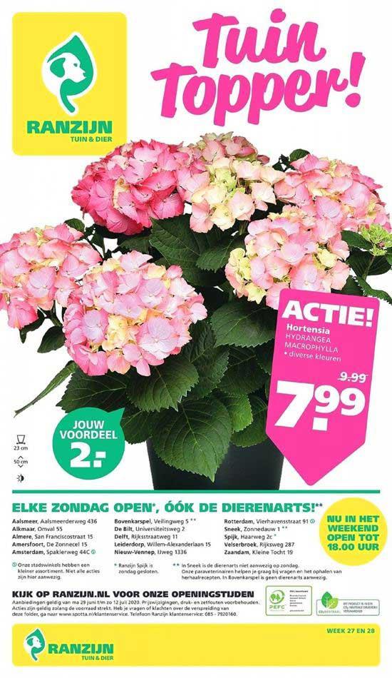 Ranzijn Tuin & Dier Hortensia