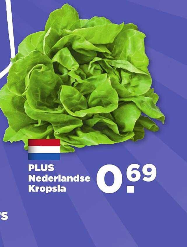 PLUS Plus Nederlandse Kropsla